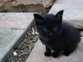 The stray cat found in Ramallah