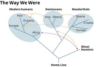 Infographic shows interbreeding between different types of species of hominins, including both archaic and modern