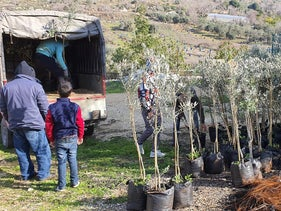 The trees that were to be planted in Yasuf village in the West Bank on Friday, February 14, 2020.