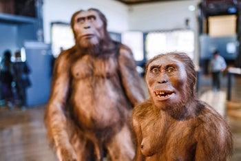 picture shows reconstruction of two Homo erectus, hairy-bodied and sans clothing: 24 MARCH 2017, VIENNA, MUSEUM OF NATURAL HISTORY, AUSTRIA