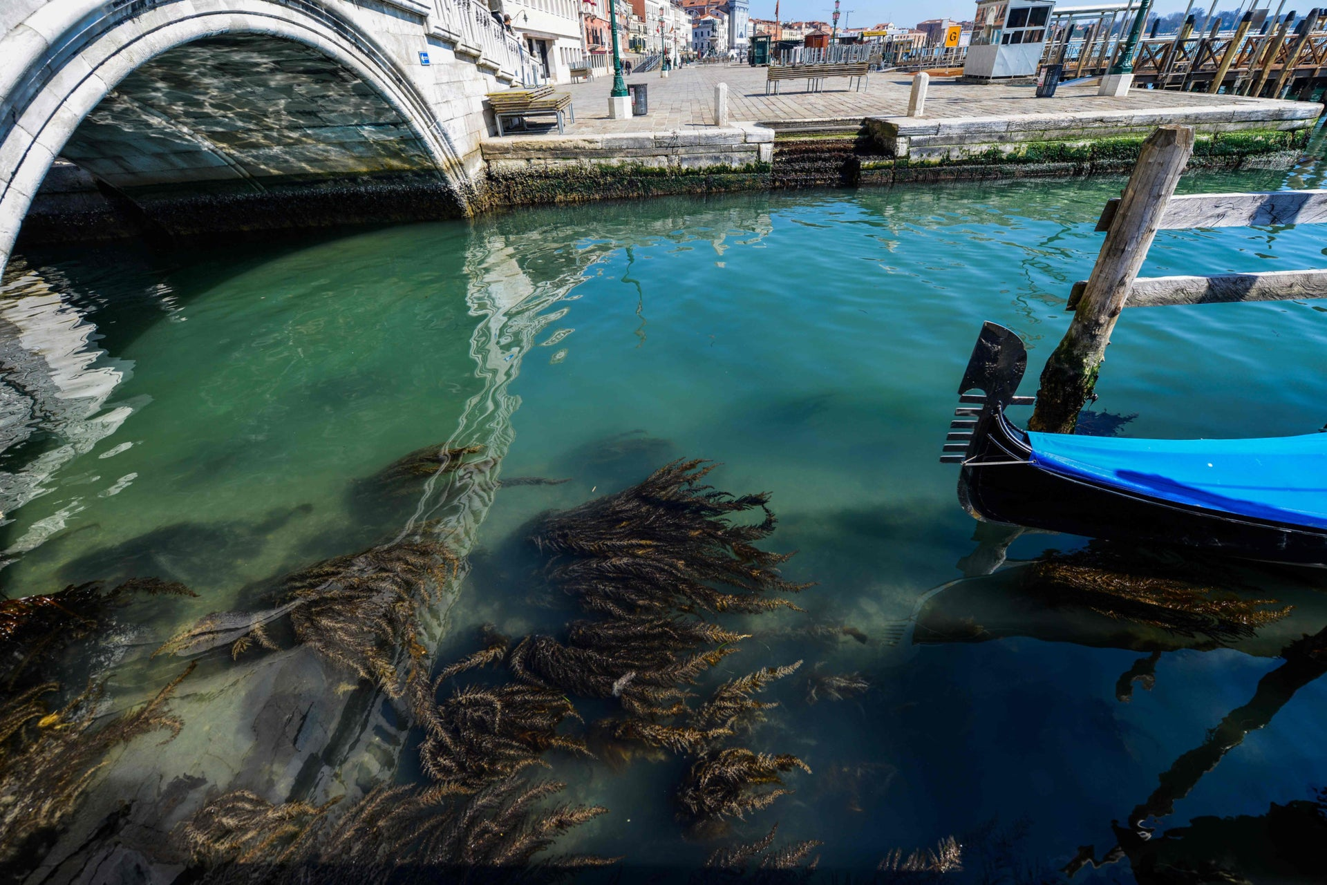 Seaweed in clear waters in Venice, Italy, March 18, 2020.