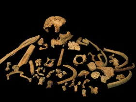 Skeletal remains of Homo antecessor