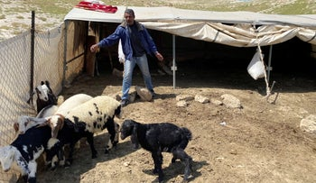 A Palestinian bedouin man looks after his sheep and goats in al-Ubeidiya town near Bethlehem in the West Bank, April 3, 2020.
