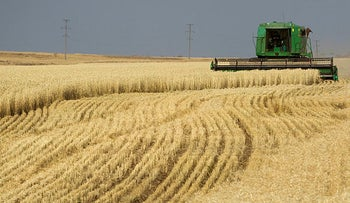 A combine harvests wheat in a field near the town of Akkol, some 110 km (68 miles) north ofKazakhstan's capital Astana, on October 11, 2011.