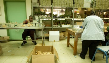 People with disabilities at work in Rosh Haayin in central Israel.