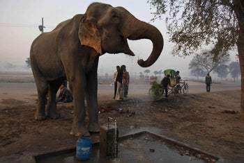 Elephant having a drink at a water tap Allahabad, India, Thursday, Dec. 23, 2010