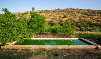 Agricultural irrigation in Wadi Fuchin, the West Bank, June 2020.