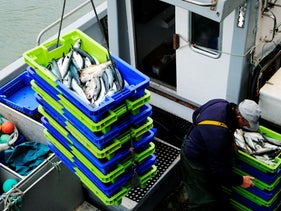 File photo: A fisherman unloads the catch of the day in the port of Ciboure, southwestern France, April 28, 2020.