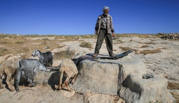 Ziad Mahamri and his goats in Bir Al-Id in the South Hebron Hills, May 2020.