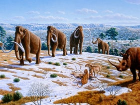a late Pleistocene landscape in northern Spain with woolly mammoths (Mammuthus primigenius), equids, a woolly rhinoceros (Coelodonta antiquitatis), and European cave lions (Panthera leo spelaea) with a reindeer carcass.