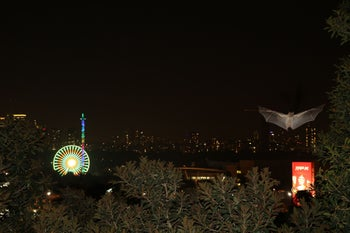 A Tel Aviv fruit bat creates a cognitive map in its mind using conspicuous landmarks