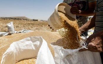Wheat being bagged in Syria. The Coronavirus and climate change are impacting and will impact food availability
