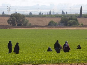 Bedouin women in a field in southern Israel, July 1, 2020.