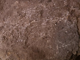 Fossilized grass fragments in Border Cave