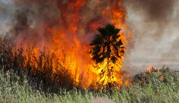 A field in Nahal Gerar burns as incendiary balloons launched from Gaza incite blazes in southern Israel, August 17, 2020.