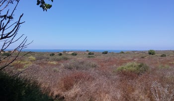 Part of the area that Ashkelon plans to declare an ecological corridor.