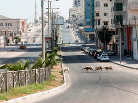 Sheep cross an empty street is pictured in Gaza City on August 27, 2020.