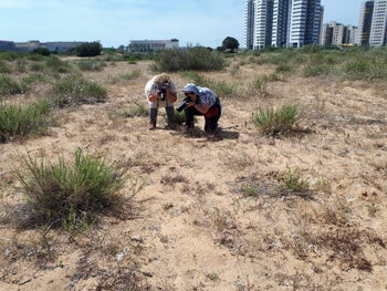 Volunteers surveying the butterfly population near Hadera, May 2020.
