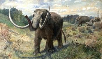 An artist's impression of the American mastodon (Mammut americanum).