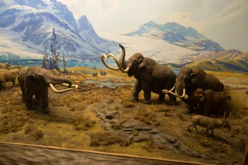 """Mastodon"" by Thomas Quine, at the American Museum of Natural History."