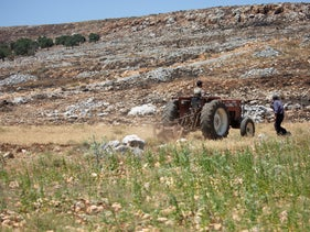 Palestinian farmers in the West Bank, July 2020.