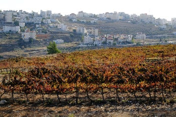 Vineyards belonging to the Psagot winery on lands belonging to the nearby Palestinian village of El Bireh, May 17, 2020.