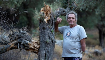 Ilan Rona next to one of the trees damaged by an fire caused by IDF training next to his olive grove, August 8, 2020.