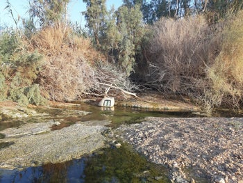 Polluted streams in the Negev, September 2, 2020