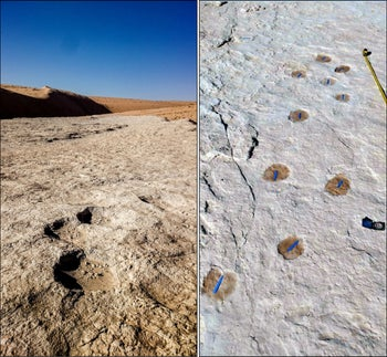 Elephant (left) and camel (right) trackways