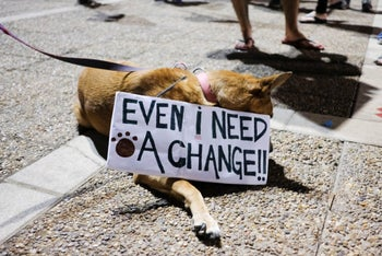A dog carries a sign during an anti-government protest in Tel Aviv, October 17, 2020.