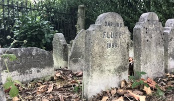 Surviving gravestones from Hyde Park Pet Cemetery in London.