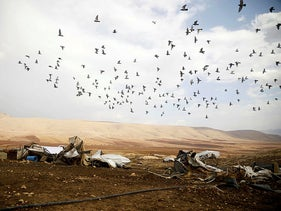 Birds fly over the site of destroyed Palestinian tented homes and animal shelters in Khirbet Humsah in Jordan Valley in the Israeli-occupied West Bank November 5, 2020