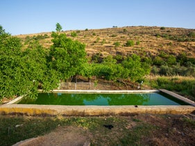 An irrigation pool in Wadi Fukin, June 2020.