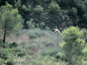A bird flying above the greenery on Mount Carmel, November 2020.
