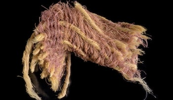 Wool textile fragment decorated by threads dyed with Royal Purple, ~1000 BCE, Timna Valley, Israel