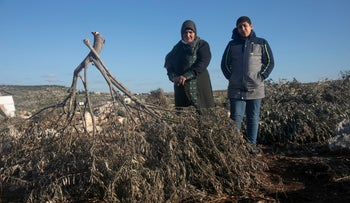 A Palestinian woman and her son stand by uprooted olive trees in Deir Ballut, West Bank, January 2021.