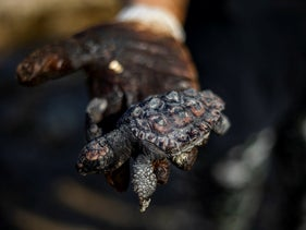 A woman holds a dead sea turtle covered in tar from an oil spill in the Mediterranean Sea in Gador nature reserve near Hadera, on Saturday.