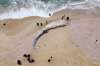 A dead whale washed up on a shore in Israel, last week.