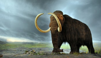 Artist's impression of a woolly mammoth