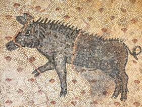 The boar mosaic at the Hanita Stockade and Tower Museum. One imagines ancient residents using the animal to find tasty mushrooms.