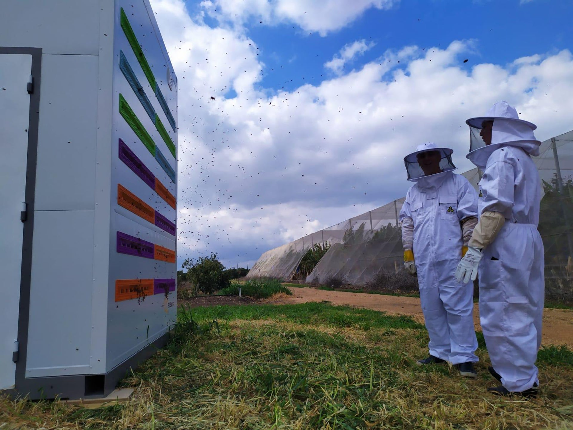 BeeWise's hives are already being used in Israel, for example on this avocado farm in northern Israel where they will remain until the end of the season to help pollination