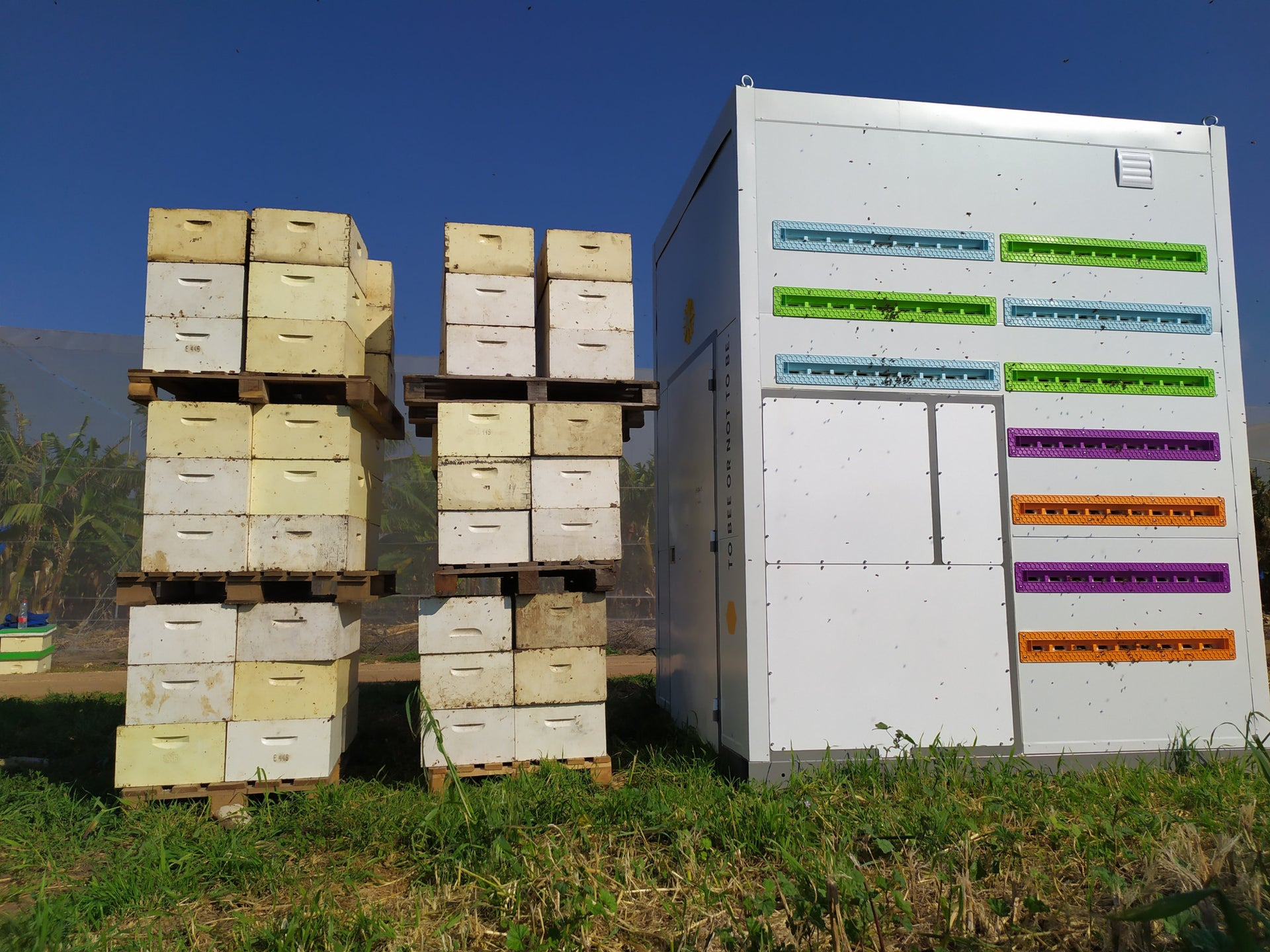 Wooden crates have been used for over 170 years in beekeeping. BeeWise's smart hives allow beekeepers to take a look inside their hives remotely and instruct a robot to take any action necessary