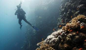 A diver swimming above a coral reef in the Red Sea, offshore of the King Abdullah University of Science and Technology near the city of Jedda.