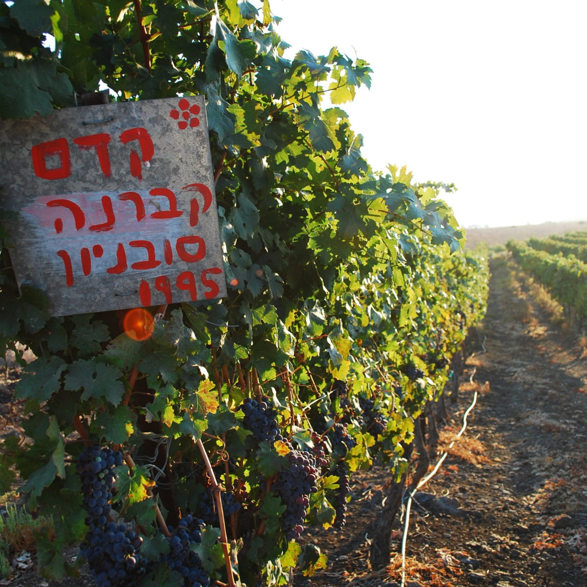 Assaf Winery in the Golan Heights.