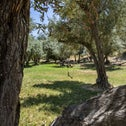 """Emek Hazeitim (""""olive valley""""): an olive grove with picnic tables alongside old farm implements."""