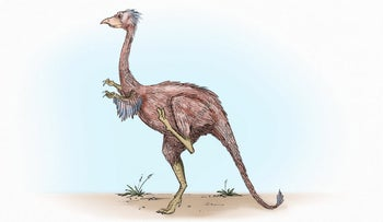 Did dinosaurs have fleas? Yes, and lice too