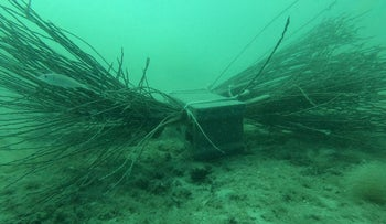 An artificial reef is placed on the sea bed to improve the marine ecosystems in Monastir, Tunisia, last week