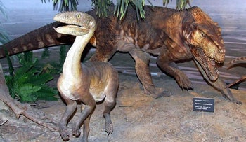 A reconstructed proto-dino Silesaurus, in Poland's Museum of Evolution.