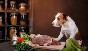 Dog and meat